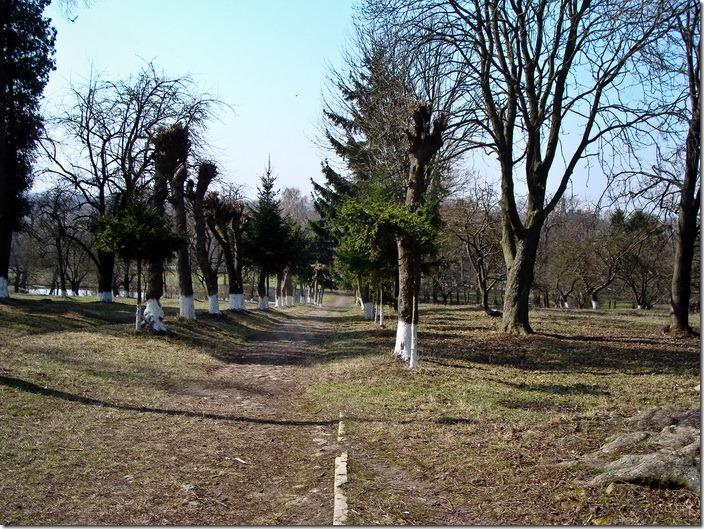 Великі Межирічі, палац Стецького, парк